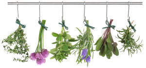 herb herbal classes certification Wisconsin Illinois Chicago Milwaukee Green Bay Madison Appleton